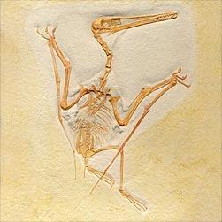 Verschiedene Arten von dating-Fossilien
